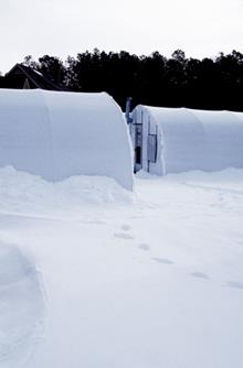 """Zone 7b...a tropical paradise! Plant Delights buried under 24"""" of snow"""
