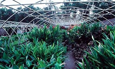We grow our own plants to ensure consistency and high quality.