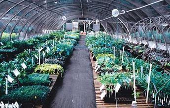 Greenhouse #6...our sales and shipping house for shade perennials.