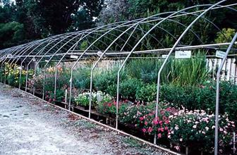 Greenhouse #4...our sales and shipping house for sun perennials.