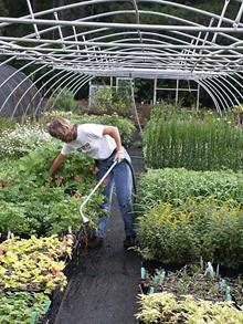 While our nursery watering is completely automated, there is always a need to check for dry spots.