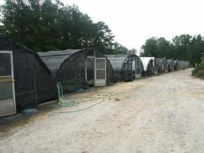 Our nursery production Jaderloon brand greenhouse range...uncovered in summer and kept at 32 degrees F in winter.