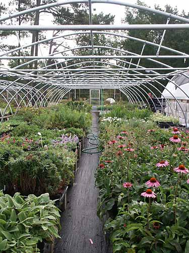 One of our production houses for sun perennials.