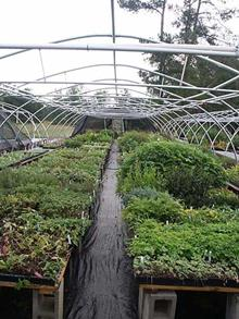 We keep a back-up supply of most plants in cell paks, so we can quickly replenish sold out items.