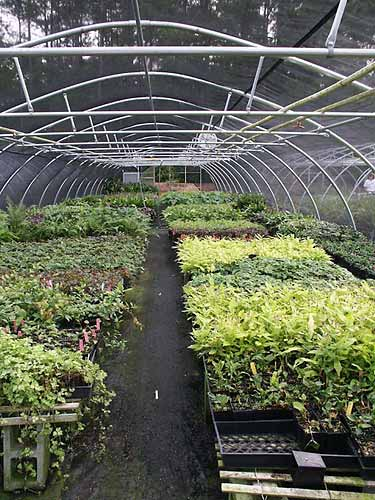 Shade perennials are produced here and then moved into the sales houses when ready.
